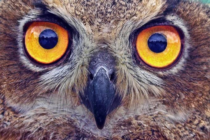 owl-2361801_1920