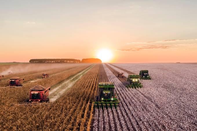 colheita plantação