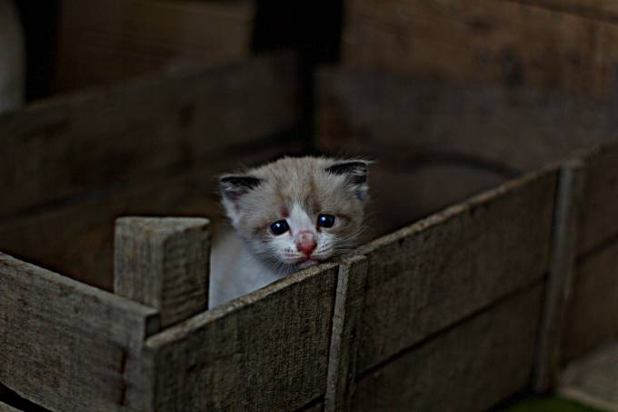 gato-brilhante-unsplash